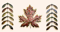 paper pulp maple leaf and seeds